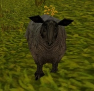 Polymorphed Sheep on some grass.