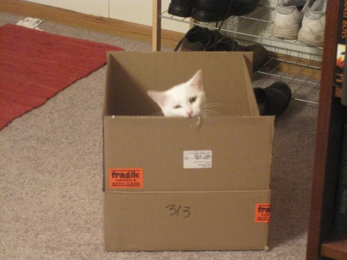 Xena, a white cat, sits in a box.